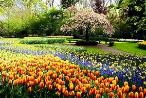 Garten Blumen Bilder : fotos von niederlande keukenhof natur tulpen garten blumen narzissen ~ Whattoseeinmadrid.com Haus und Dekorationen