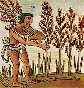 Aztec Farming