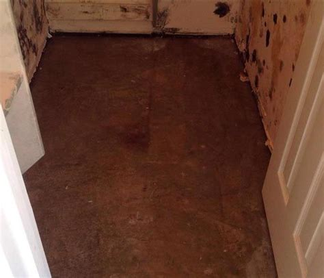 mold removal and remediation including black mold