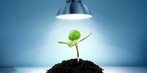 best lighting for plants led grow lights the best choice for indoor plants gardens