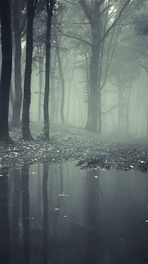 dark forest iphone wallpaper  images