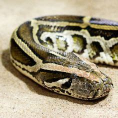 1000 images about pet photography on pinterest snakes