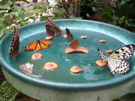 butterfly feeder diy butterfly feeder ehow uk