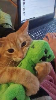 why does my cat run away from me kitty creeper creeper exposeds in kittys