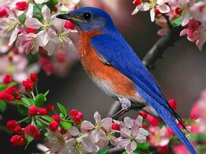 Wallpapers Birds Nature Bird Cool Bluebird Pretty