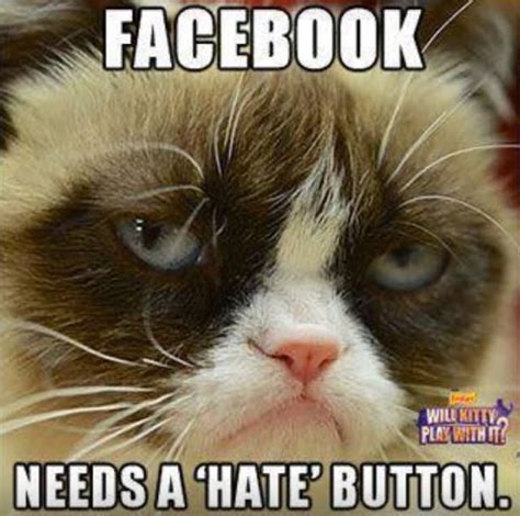 Funny Grumpy Cat Memes - facebook needs a hate button funny grumpy cat meme picture
