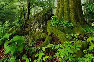 Kleine Sportgeräte Für Zu Hause : der kleine urwald zu hause forum f r naturfotografen ~ Lizthompson.info Haus und Dekorationen