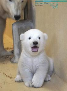 Cute Emergency on | Surprise baby, Baby polar bears and ...