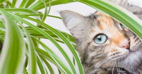 Für Katzen Giftige Pflanzen by 5 Giftige Pflanzen F 252 R Katzen Die Sie Meiden Sollten