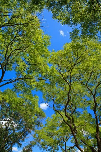 Canopy Environment by Background Blue Branch Canopy Color Environment