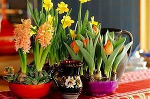 Planter Des Bulbes : planter les bulbes de printemps guide de floraison des fleurs ~ Dallasstarsshop.com Idées de Décoration