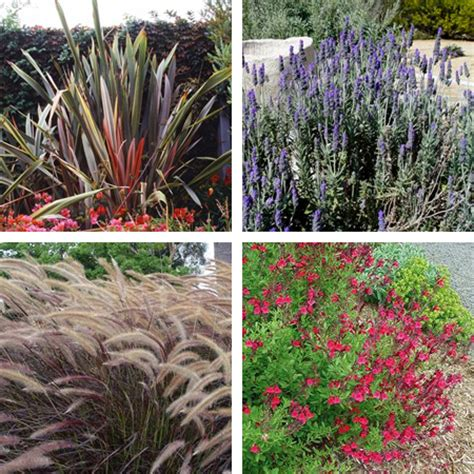 low maintenance plants outdoor related keywords suggestions for outdoor low maintenance plants