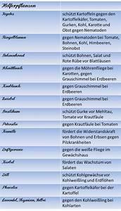 Hochbeet Bepflanzen Im 1 Jahr : berliner landpomeranze alles rund ums hochbeet iii mischkultur und fruchtfolge garten ~ Frokenaadalensverden.com Haus und Dekorationen