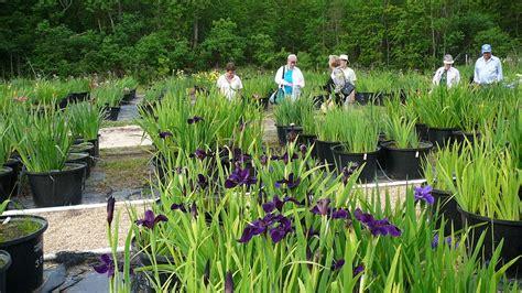 world of irises la irises grow well with other plants