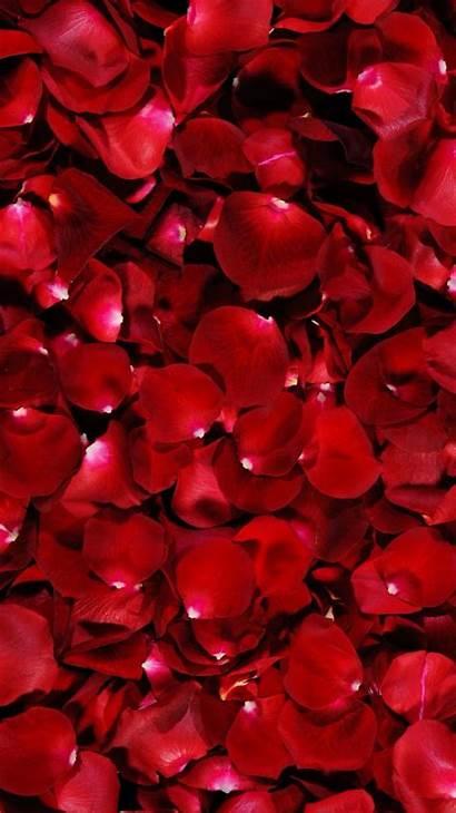 Rose Petals Aesthetic Roses Rainbow Diamond