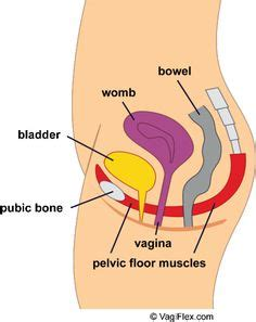 hypertonic pelvic floor gif showing pelvic floor relaxing and