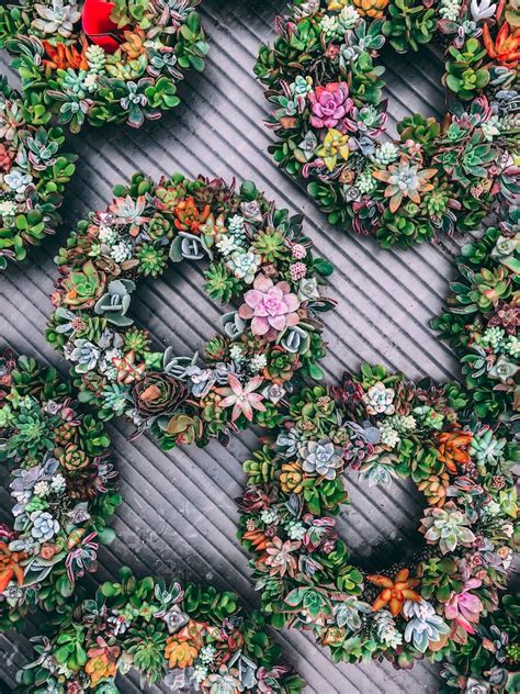 How To Plant A Vertical Succulent Garden by Hanging Succulents Make A Vertical Garden Easier Than