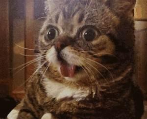 gifbase - #omg #donotwant #surprised #awkward #cat
