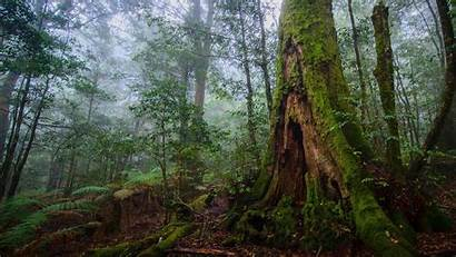 Forest 4k Nature Landscape Tree Trees Rock