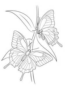 ulysses butterflies coloring page  printable coloring pages