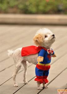 Funny Dogs In Costumes-Dresses Photos   Funny Collection World