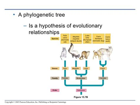 chapter  tracing evolutionary history