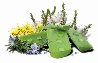 Natural Skin Ingredients Care Answer Nature Health