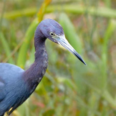 florida birds photography tips photo gear apogee