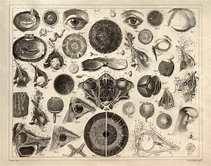 Eye Chart Diagram Print Vintage Illustration Anatomy Print