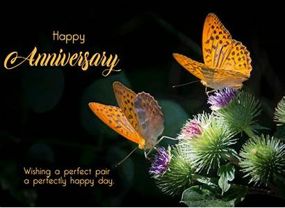 Anniversary Perfect Pair Butterflies Couple Wishes Happy