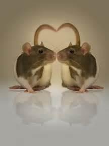 Adorable Pet Rat