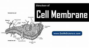 Structure Of Cell Membrane  Basic Guide For Students