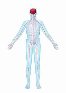 How To Treat The Symptoms Of Peripheral Neuropathy