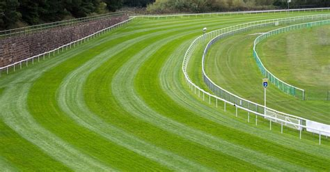 Horse Racing Track And Ground Types