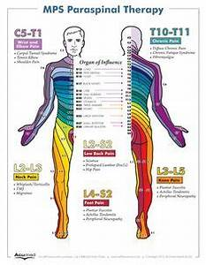 Anatomical Chart Company Canada Body Pics Website 0101 Jpg Dermatomes Pinterest