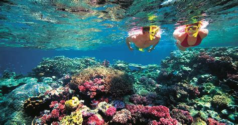 Phi Phi Island Top Snorkeling Activities Things To Do In