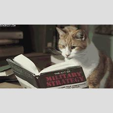 Book Read Gif  Find & Share On Giphy