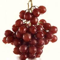 fruit research plant sciences