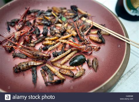 insecte cuisine insect meal food fried on plate thaifood