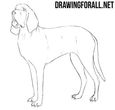 draw  bloodhound drawingforallnet