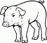 Pig Pot Belly Draw Kako Nacrtati Svinju Clipart Drawing Pigs Dibujos Slike Realistic Objects Coloring Cerdo Dibujo Schwein Slika Schwarz sketch template