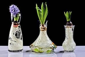 Blumenzwiebeln Im Glas : hyazinthen im glas kultivieren ~ Markanthonyermac.com Haus und Dekorationen