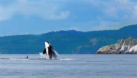 Victoria Island Vacations, Check Out Victoria Island