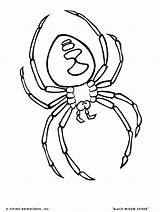 Coloring Tick Bug Spider Template Templates sketch template