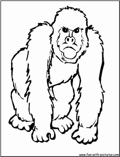 Coloring Animal Pages African Animals Gorilla Zoo