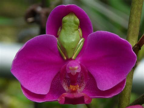 how to grow orchids growing orchids in trees pictures