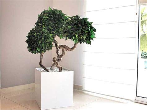 plantes de bureau sans soleil plantes de bureaux plantes stabilisées i bureau
