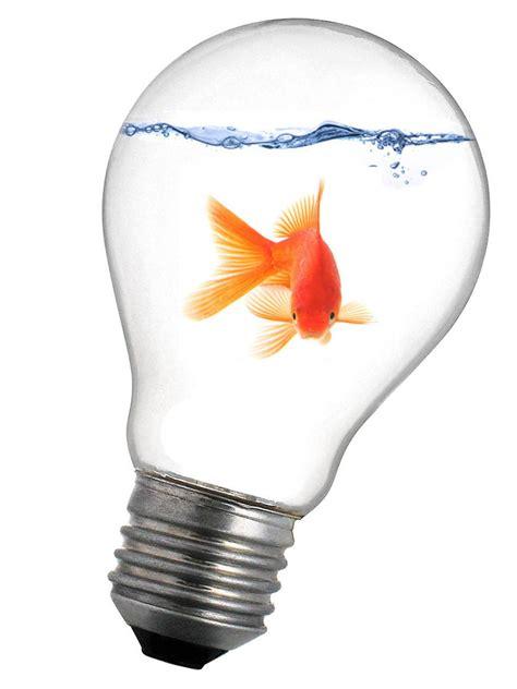goldfish in lightbulb by pawnile on deviantart