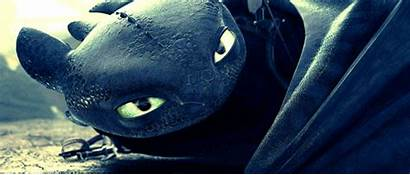 Toothless Dragon Httyd Train Hiccup Why Dragons