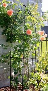 Rankhilfe Für Clematis : rankhilfe f r rosen halbrund i h he 130 cm pictures to pin on pinterest ~ Whattoseeinmadrid.com Haus und Dekorationen